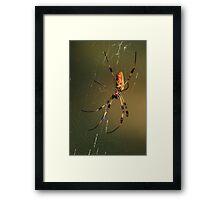 Orb-Weaver Spider Framed Print