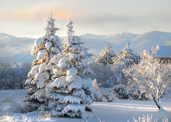 First Light on Last Night's Snow by Kay Kempton Raade