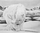 Bear Kiss - Polar Bears by Heather Ward