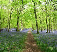 Path through Bluebell grove by Sally-Anna