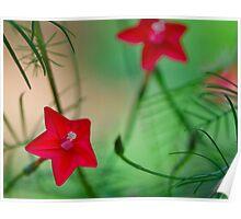 Kimono Flower Poster