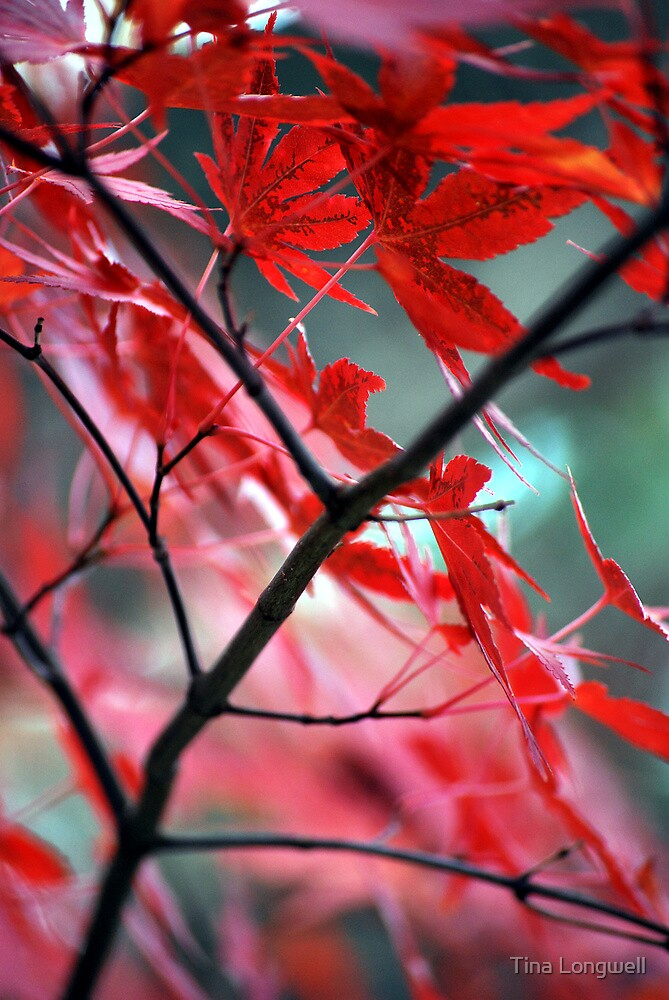 Fall Focal Point - Red by Tina Longwell