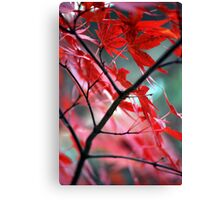 Fall Focal Point - Red Canvas Print