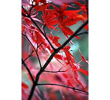 Fall Focal Point - Red Photographic Print