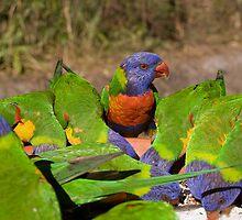 Rainbow Lorikeets by Leanne Nelson