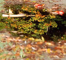 Fall Reflections - Trees in a Puddle of Water by mstecher