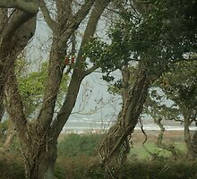 A sea view through the trees by Debby Chadwick