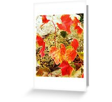 Last of the Summer Vine Greeting Card