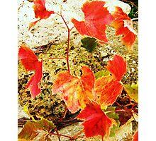 Last of the Summer Vine Photographic Print