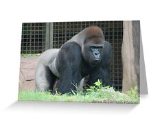 Silverback Greeting Card