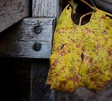 Autumnal Gold by Mandi Whitten