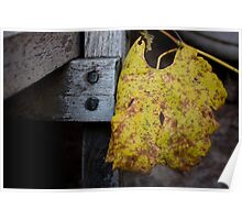 Autumnal Gold Poster