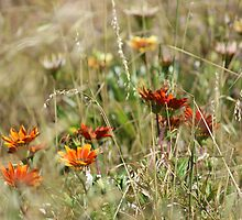 Flowers by John Raftery