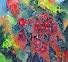 Kalyna Berries  by bevmorgan