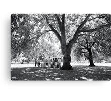 Plane Tree, Greenwich Park 2005 Canvas Print