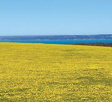Yellow Fields, Deep Creek by John Raftery