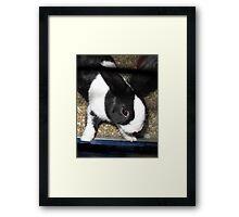 Black and White Rabbit Framed Print