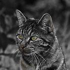 STRAY by UncaDeej