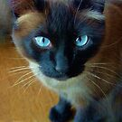 Kit Kat by Kent Burton