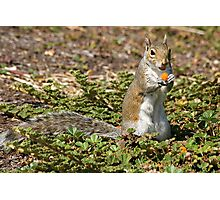 Squirrel Snacks Photographic Print