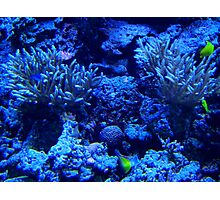 Blue Reef Photographic Print