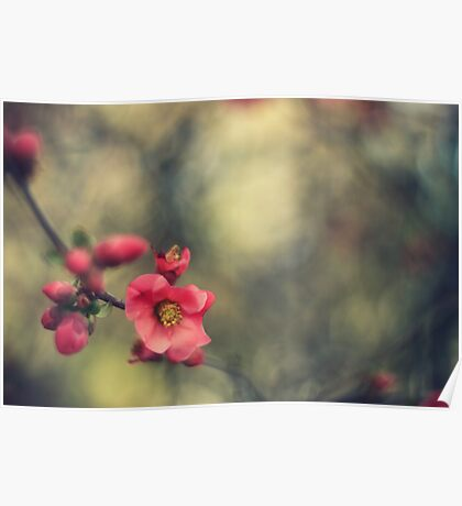 blossoms, painterly Poster