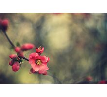 blossoms, painterly Photographic Print