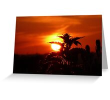 Nettles at Dawn Greeting Card