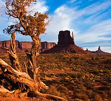 Shaggy Bark Juniper in Monument Valley by Nickolay Stanev