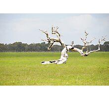 Nannup tree Photographic Print