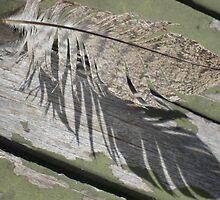 Feather Echo by GemmaWiseman