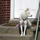 Beautiful Watch Dog by Jan  Tribe