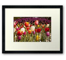 Spring Flowers in Bloom Framed Print