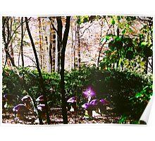 Mushroom Seats Poster