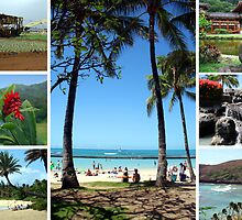 Images of Hawaii by Deb22