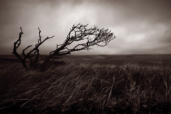 Windswept by Claire Armistead