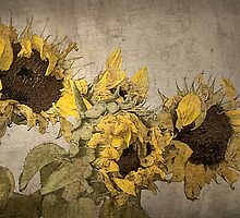 Sunflowers by Rosalie Dale