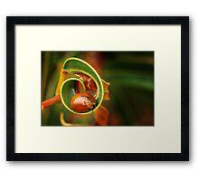 Leaf Beetle - Tortoise beetle Framed Print