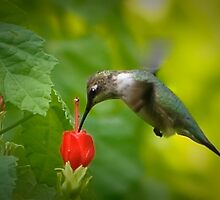 Nature's Hummingbird Feeder by Charles Dobbs Photography