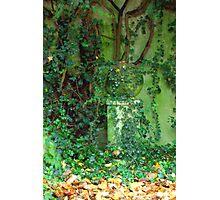 The Green Garden Photographic Print