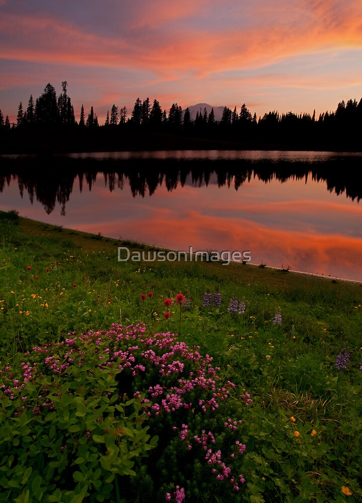 Mountain Heather Reflections by DawsonImages