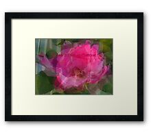 A Rose for Christmas Framed Print