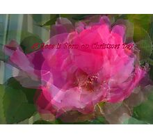 A Rose for Christmas Photographic Print