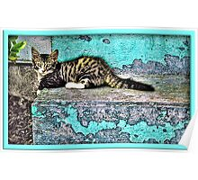 Kitty On The Front Steps Poster