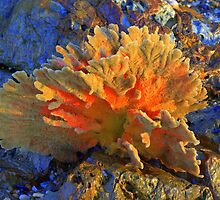 Sea sponge  by Doug Cliff