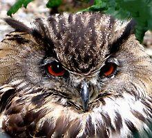 NIGHT OWL by gothgirl