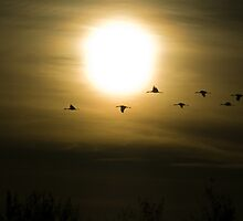 Sandhill Cranes at Bosque del Apache by Mitchell Tillison