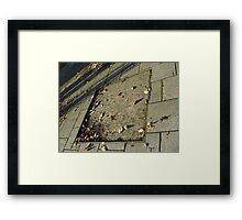autumn quadrilateral (pavement in Fall, Burntisland) Framed Print
