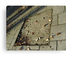 autumn quadrilateral (pavement in Fall, Burntisland) Canvas Print