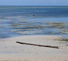 Low tide, Shelley beach, Mombasa  by Susan Harley